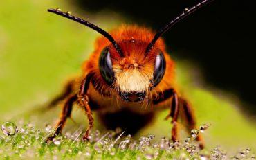Bee Control in Dubai