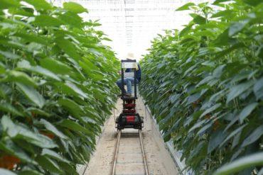 Technology Innovation in Dubai pest Industry
